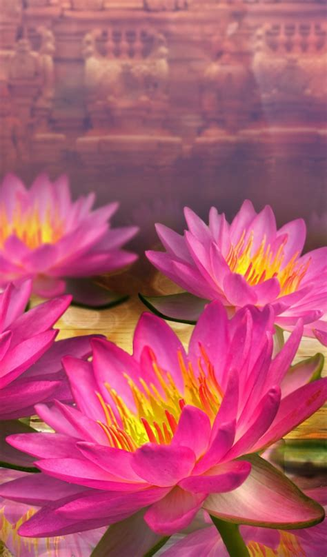 flower wallpaper tab 600x1024 pink lotus flowers galaxy tab 2 wallpaper
