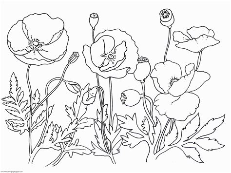 free printable coloring pages remembrance day remembrance day poppy coloring page coloring home