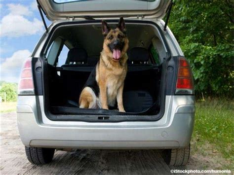 best cars for dogs best fuel efficient cars for owners upcomingcarshq