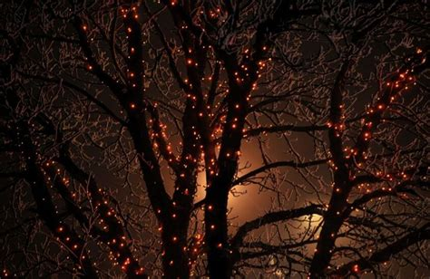 how to photograph a tree with lights cover picture photo lights in a tree