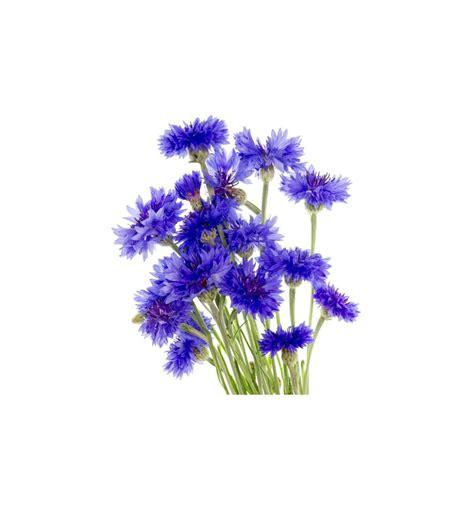 cornflower color cornflower blue