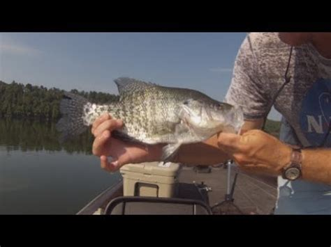 crappie fishing brush piles   summer youtube