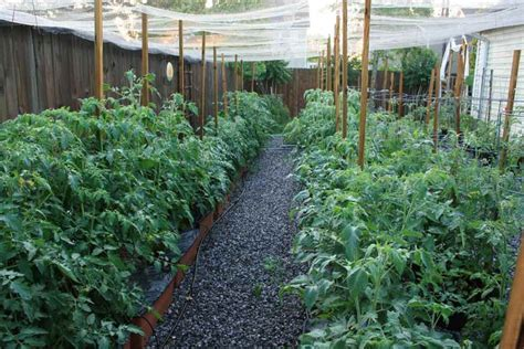 backyard farms tomatoes inside urban green sub irrigated planters sips a backyard tomato garden or business