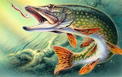 wallpaper figure fishing fish art hook  pike