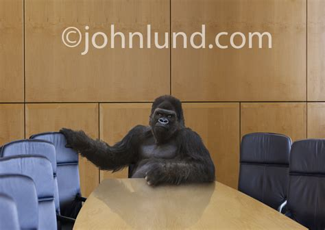 gorilla in the room corporate power a gorilla in the board room