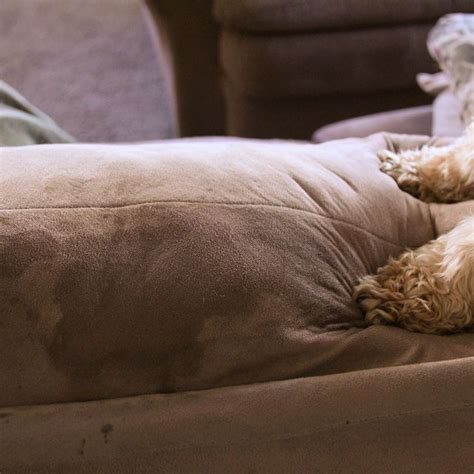 remove urine smell from couch cushions how to clean urine out of couch cushions cushions couch