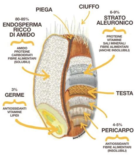 w proteine farina gli enzimi nella farina lievitando