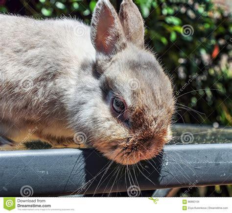 bagno coniglio bagno decorativo coniglio fotografia stock immagine