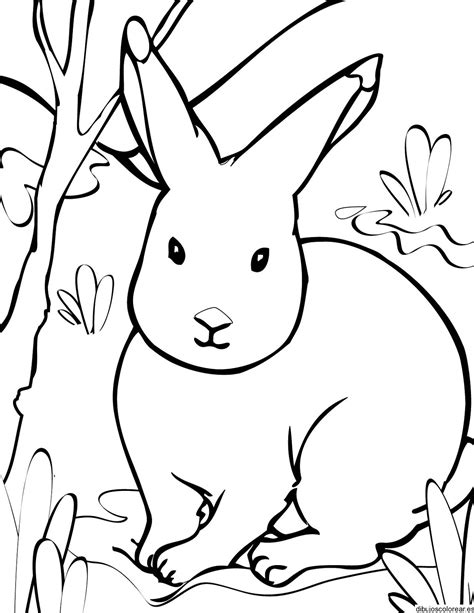 winter rabbit coloring page conejos dibujos para colorear