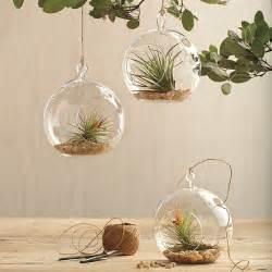 glass garden globe