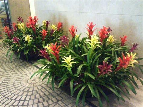 fiori di appartamento fiori di appartamento piante da appartamento con fiori