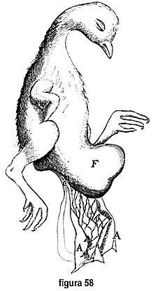 vasi mesenterici marcello malpighi appendix de ovo incubato appendice
