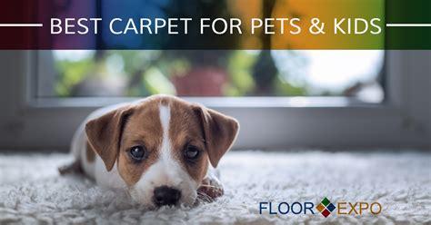 best carpet for pets carpet installers fairfield best carpet for pets