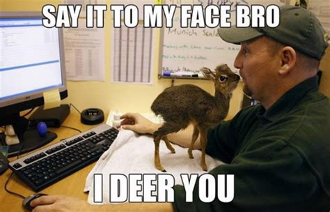 Say That To My Face Meme - say it to my face funny animal meme