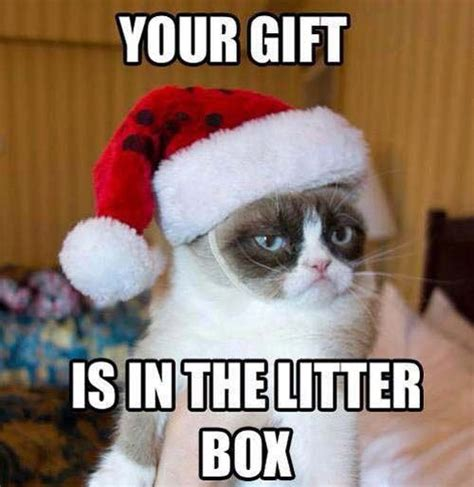 grumpy has your gift pictures photos and images for
