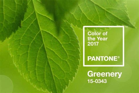 color of the year for 2017 pantone greenery reactions to the 2017 color of the year
