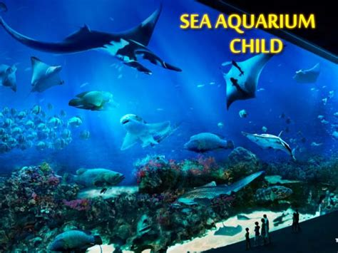 Diskon Trick Eye Museum Singapore Ticket Anak 4 12 Thn s e a aquarium rws child