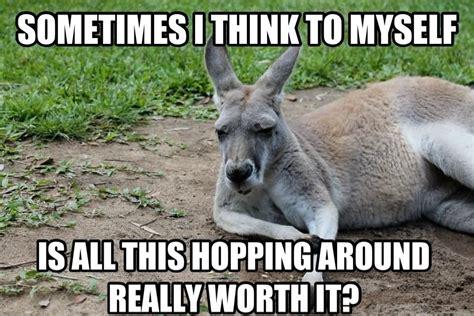 Kangaroo Meme - 29 most funniest kangaroo memes images graphics picsmine