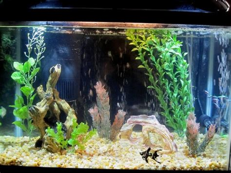 aquarium decorations aquarium decorations ratemyfishtank com