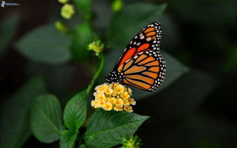 farfalla fiore farfalla sul fiore