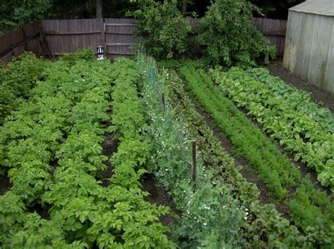 Veg Garden Ideas Vegetable Garden Ideas In Your Yard Margarite Gardens