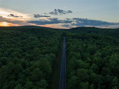 long road trees forest aerial view