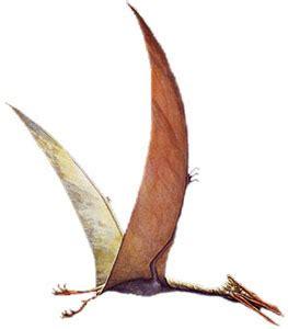dinosauri volanti criptosito dinosauri volanti