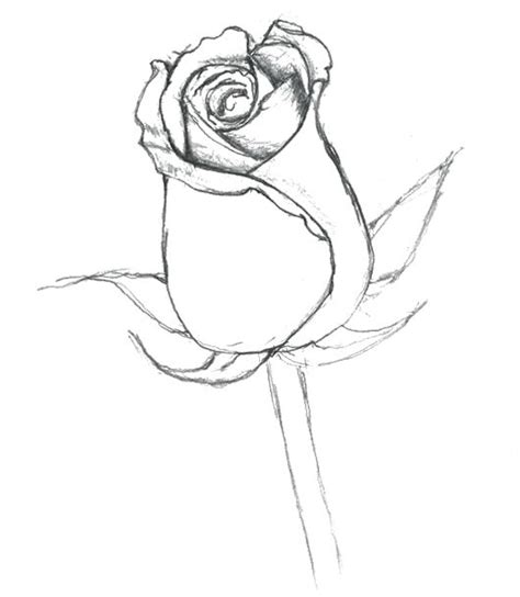 coloring page flower bud 17 best ideas about rose bud tattoo on pinterest rose