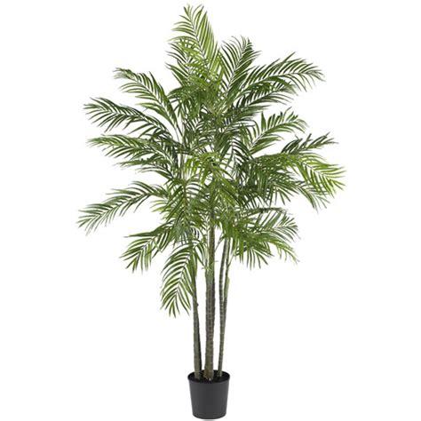 trees at walmart 6 areca silk palm tree walmart