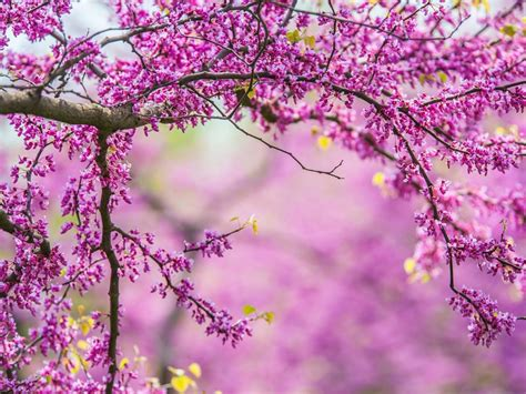 pics of spring spring flowers one hd wallpaper pictures backgrounds