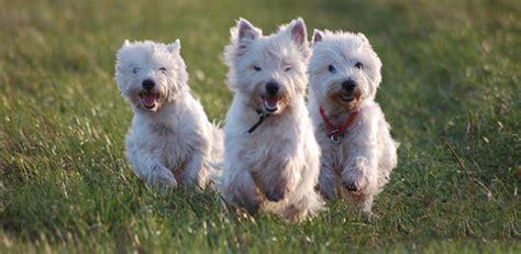 top 10 breeds top 10 breeds onlytoptens