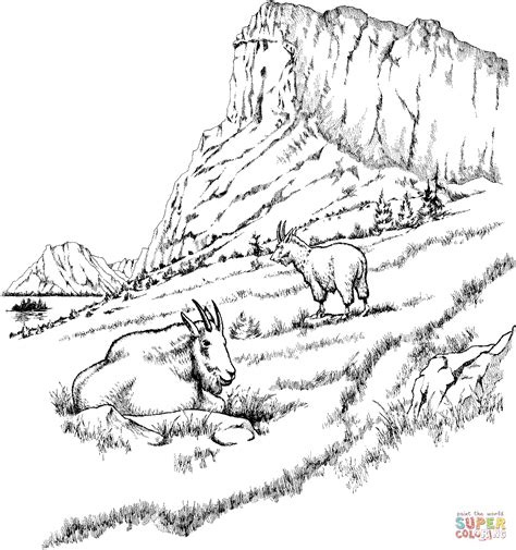 coloring pages mountain goat two mountain goats coloring page supercoloring com