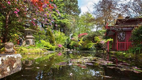 japanese garden compton acres in dorset celebrates japanese horticulture