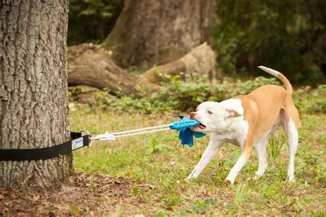 best toys for pitbull puppies 13 indestructible toys for pit bulls strong toys for dogs
