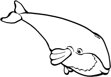 whale outline coloring page whale outline clipart best