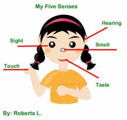 Image of the five senses learn all about the human body senses
