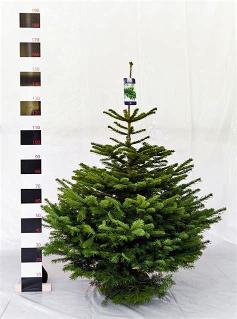 bauers weihnachtsbaum spargel und erdbeeren bauer bossmann