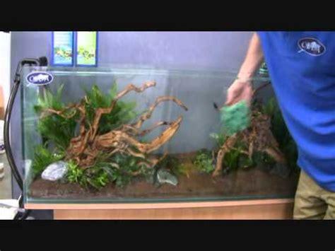 aquarium design eau chaude mise en eau installation d un aquarium youtube