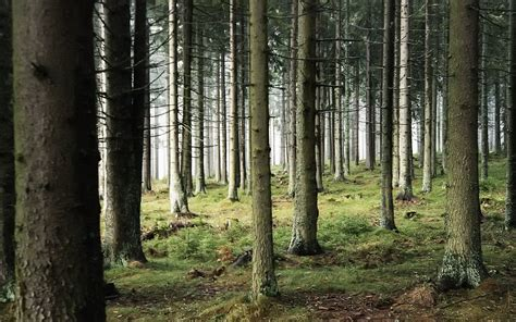 the wood for the trees one s view of nature books woods background hd wallpaper 1783404