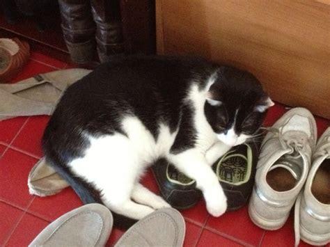 lolistar denied guestbook zentradocom lolistar shotclip alimentazione corretta gatto