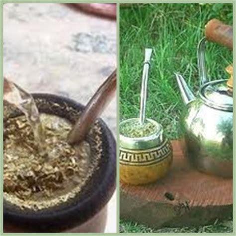 plantas medicinales a tu salud cola de caballo plantas medicinales a tu salud cola de caballo