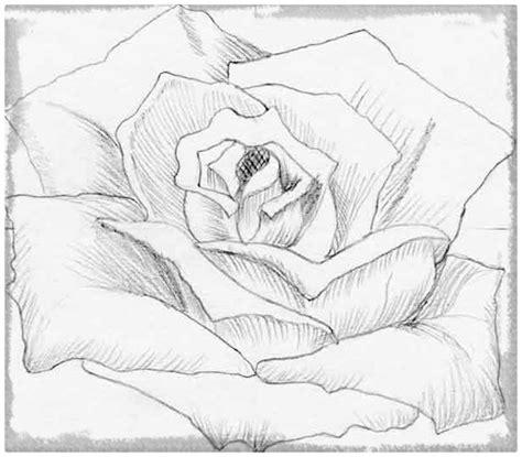 imagenes para dibujar a lapiz de flores como dibujar flores a lapiz para regalar dibujos de amor