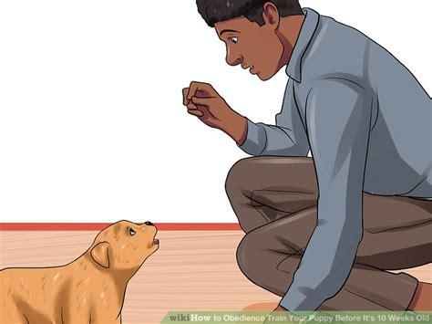 how to obedience your how to obedience your puppy before it s 10 weeks
