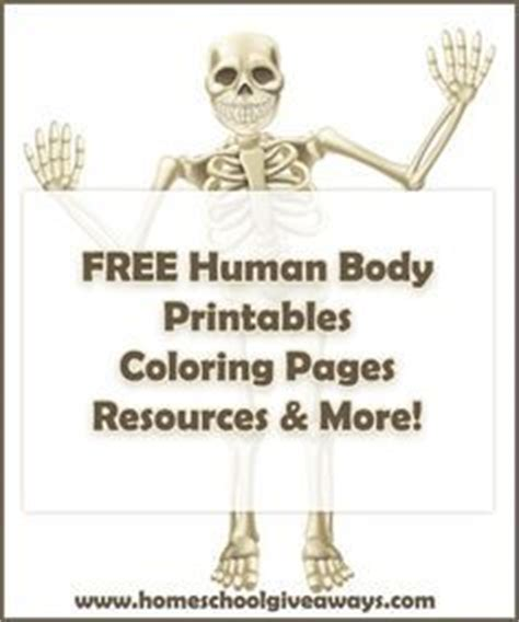 anatomy and physiology coloring workbook answers page 62 human anatomy printables anatomy classical conversations
