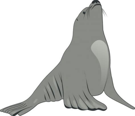 gambar kartun clip hewan singa laut clipart best clipart best