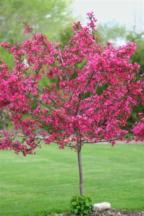 decorative trees small decorative trees michigan trees make hardy