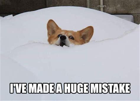 Funny Corgi Memes - best 25 funny corgi pictures ideas on pinterest corgi