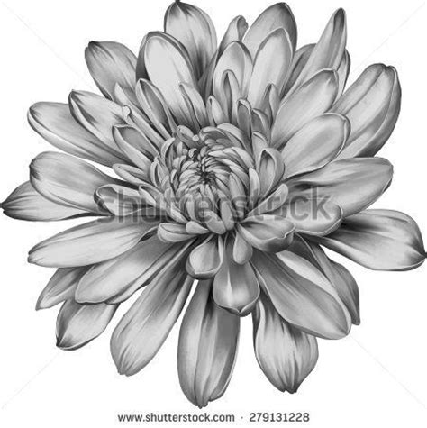 november birth flower tattoo chrysanthemum tattoos best 25 november flower ideas on pinterest flower