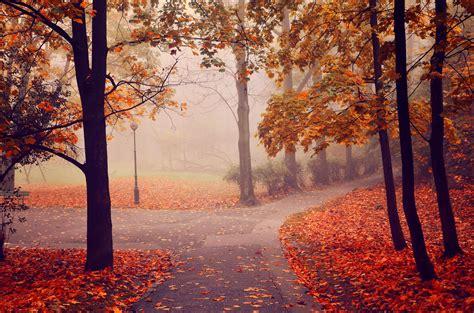 autumn park road trees fog landscape wallpaper