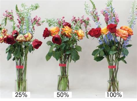 Pupuk Yang Bagus Untuk Bunga Mawar cara merawat bunga mawar potong yang sudah layu